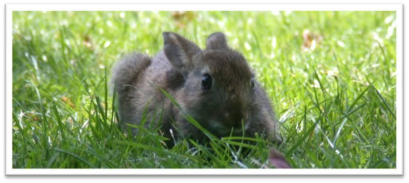 Amy, verdens største kanin. thumbnail